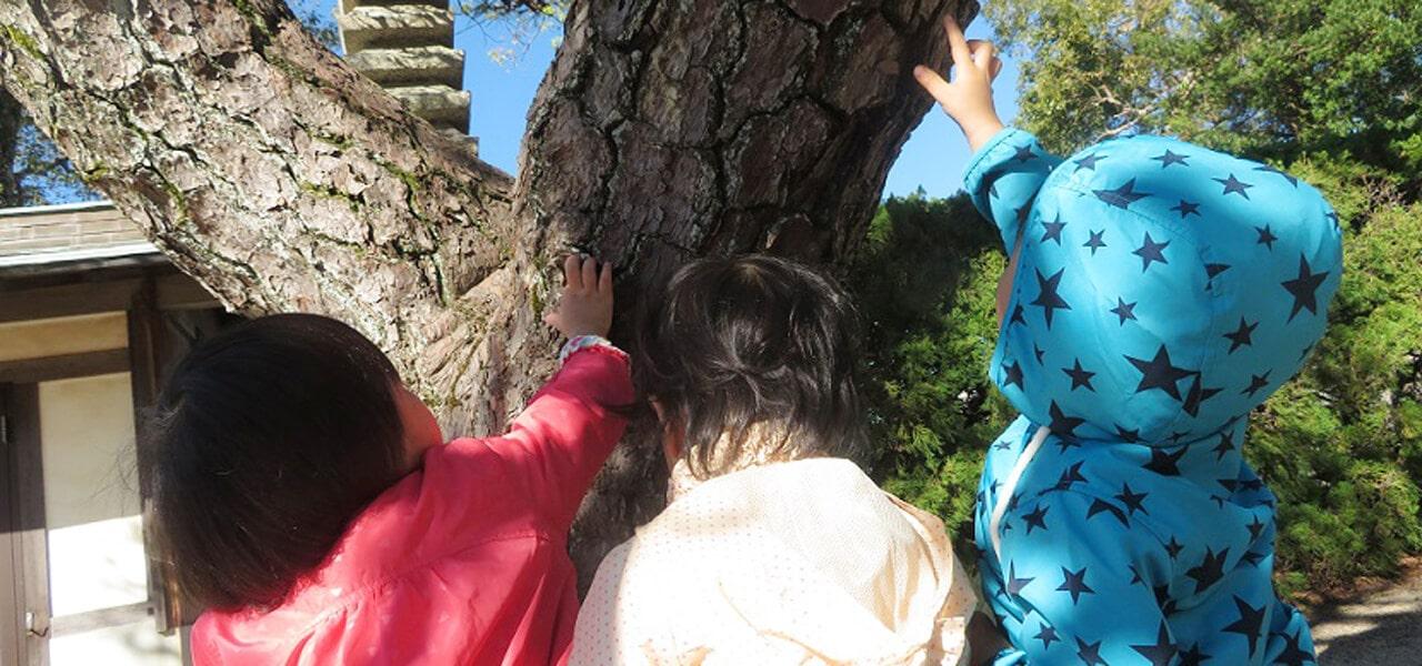 松の木集合